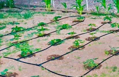 системы автоматического полива огорода